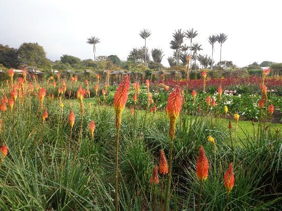 Jardin botanico colombia south america www for Paisajismo bogota