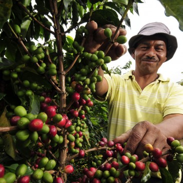 Colombia Tourist Attractions Discover The Coffee