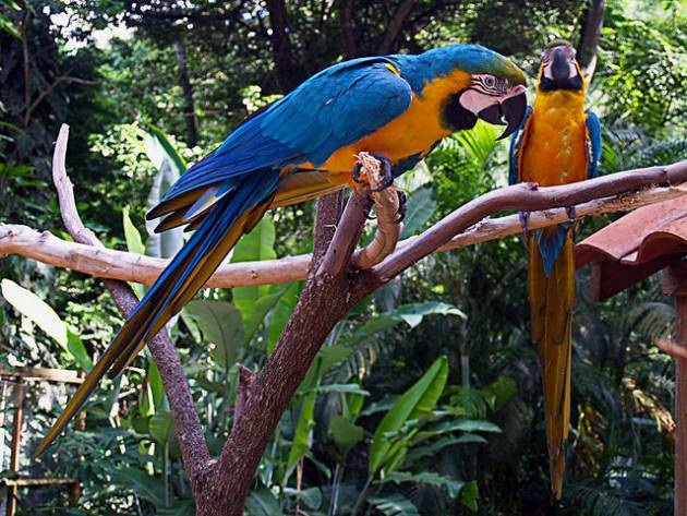 colombia_birds1
