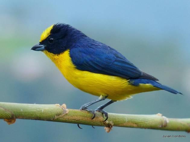 colombia_birds3
