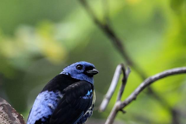 colombia_birds5