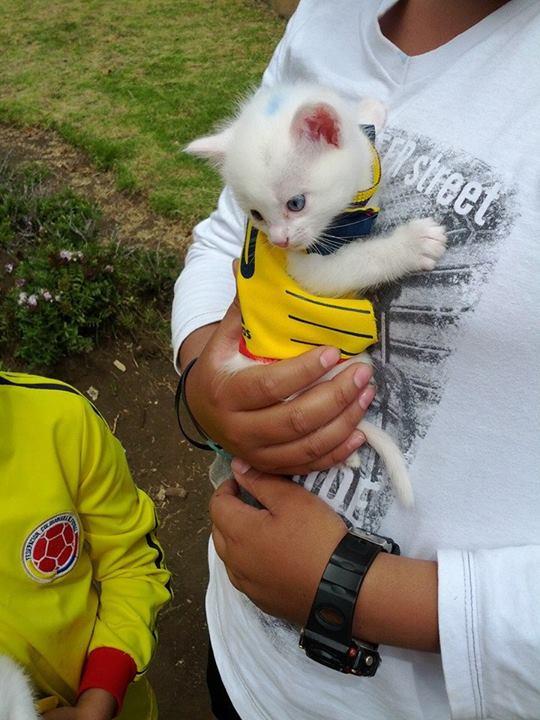 colombianfancat